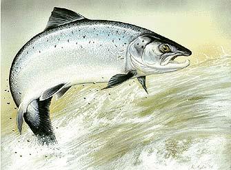 Salmon Fishing Bajafishing Net