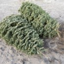 Recycled Christmas Trees Help for Fishing