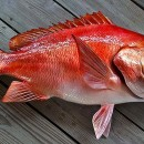 Fishing in Alabama: Red Snapper
