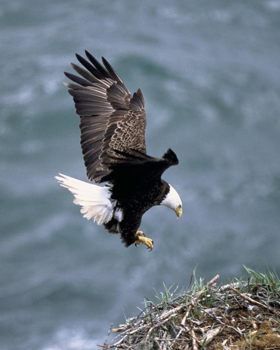 An eagle at San Juan
