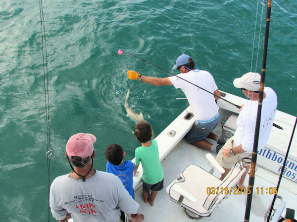 shark southbound chatter fishing