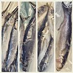 Perfect Baitfish for Miami Deep Sea Fishing