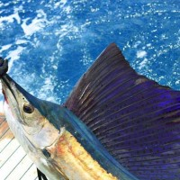 7 Top Reasons Why You should Go Fishing