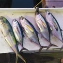 Key West Fishing – Enjoyment for All