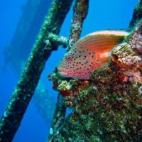 Wreck and Reef Fishing – A Rewarding Experience