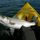 10 Useful Kayak Fishing Tips to Let You Gain Maximum Success in Your Learning Phase