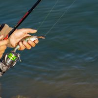 Fishing License – A Great Way to Protect Fisheries while Fishing